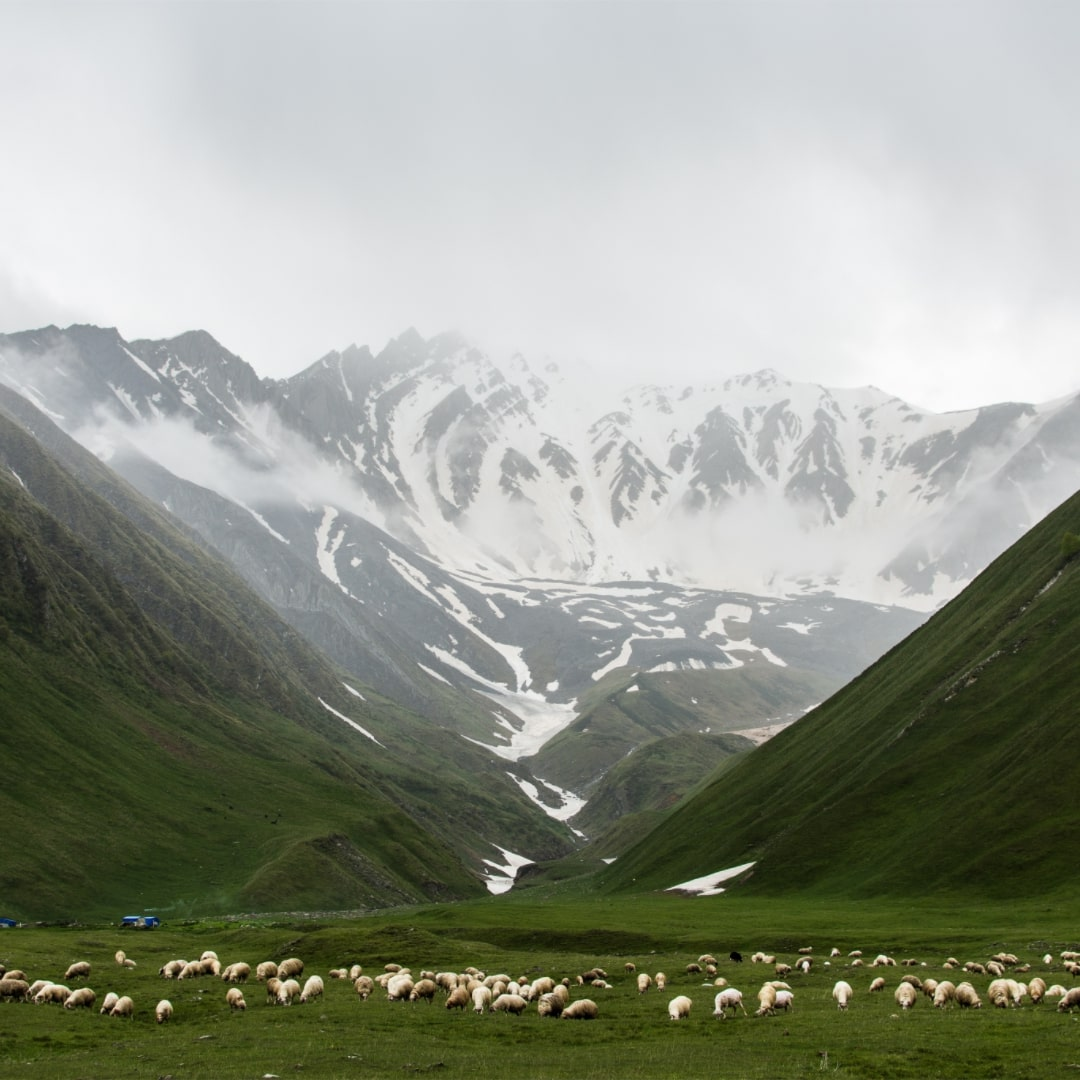 Irish-mountain-with-snow-on-peak-and-sheep-grazing-on-field-at-base-of-the-mountain
